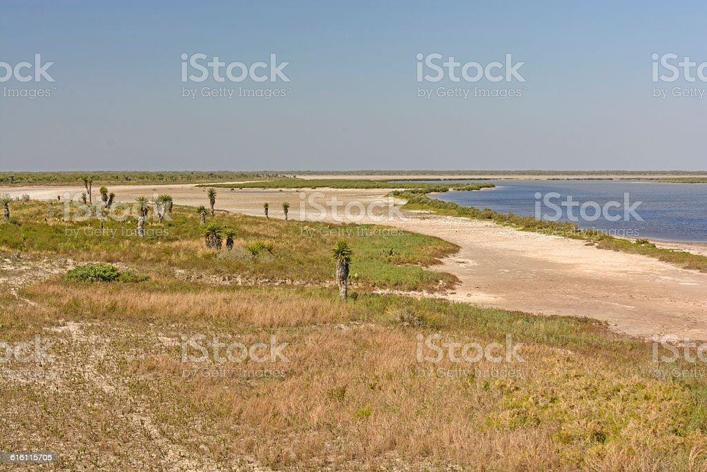 Shore Habitat of a Gulf Coast Refuge stock photo