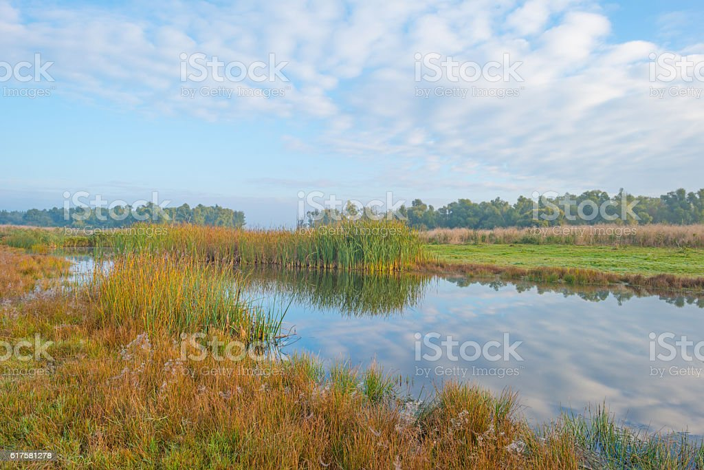 Shore of a lake at sunrise in autumn stock photo