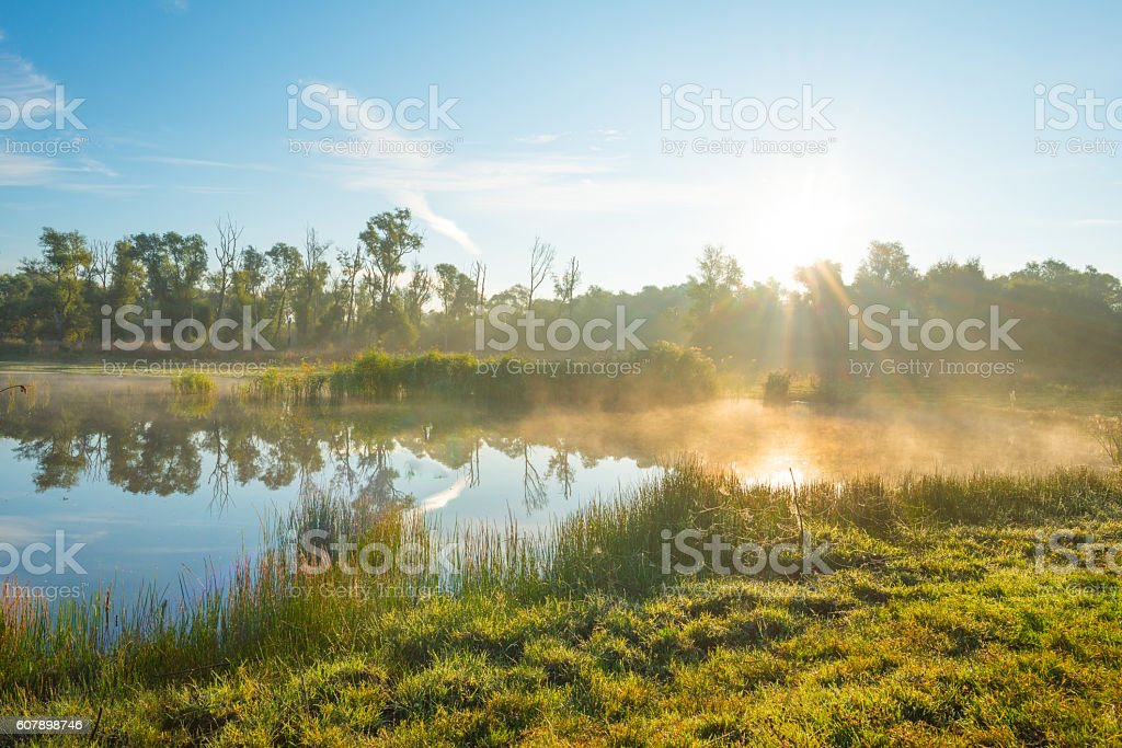 Shore of a lake at sunrise in summer stock photo