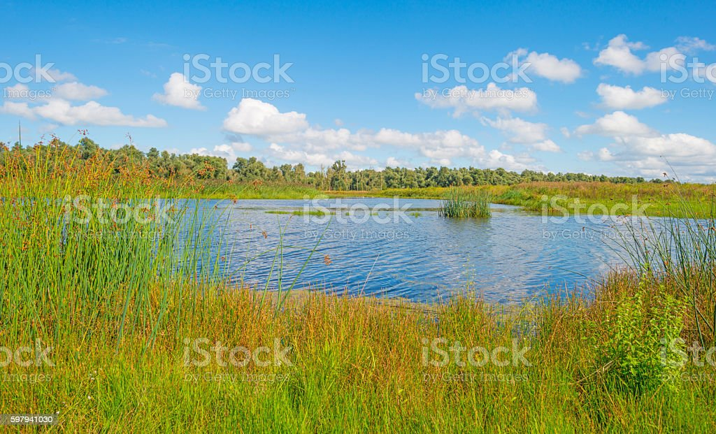 Shore of a lake in summer foto royalty-free