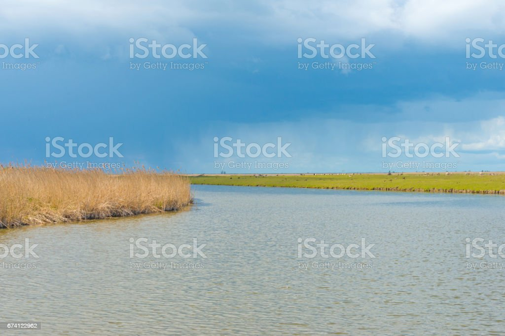 Shore of a lake in wetland in spring in sunlight royalty-free stock photo