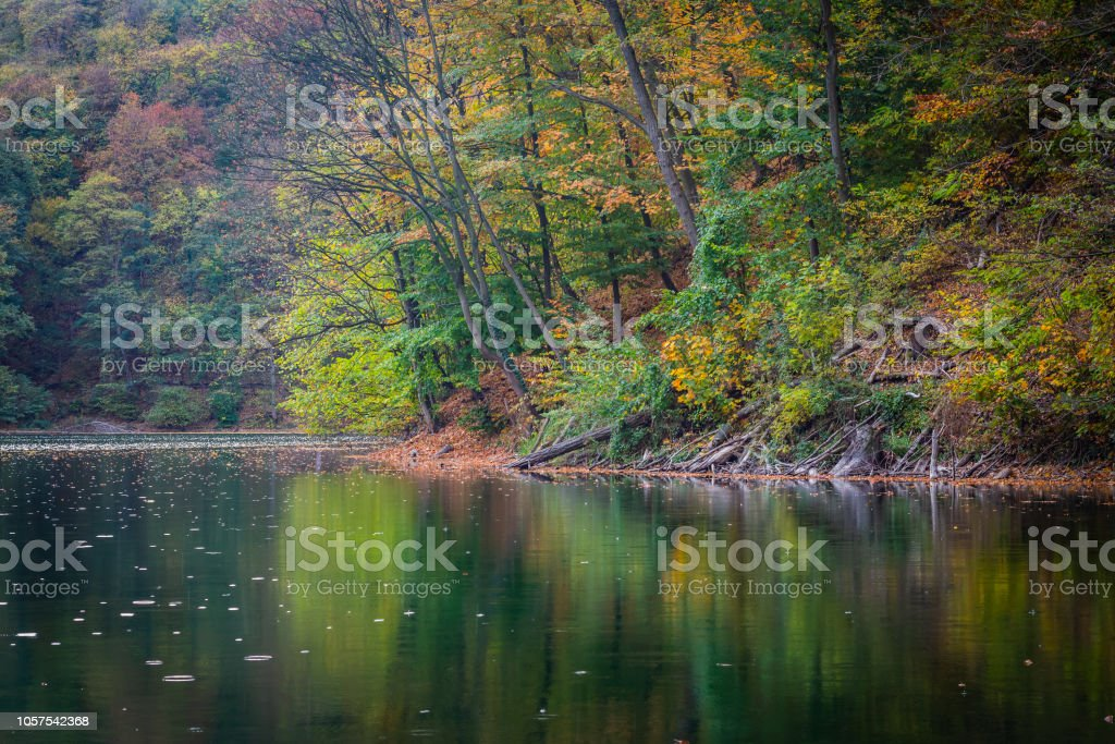 Shore of the lake during autumn, green and yellow leaves above the water – zdjęcie