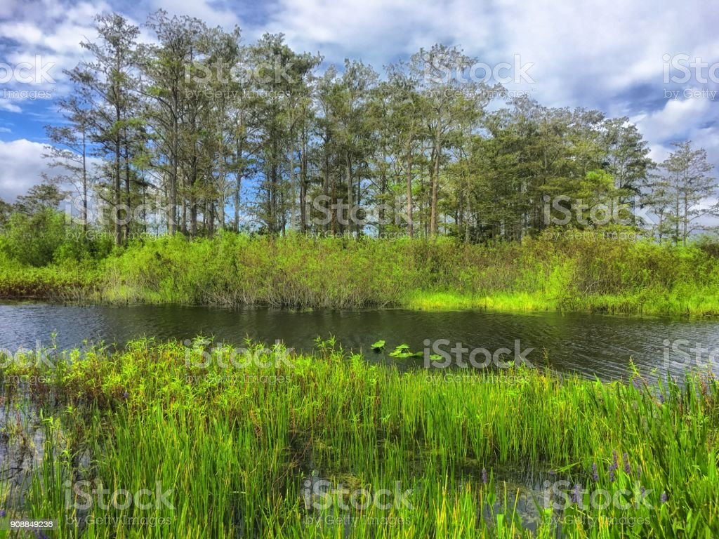 shore of the swamps and rivers of the marsh stock photo