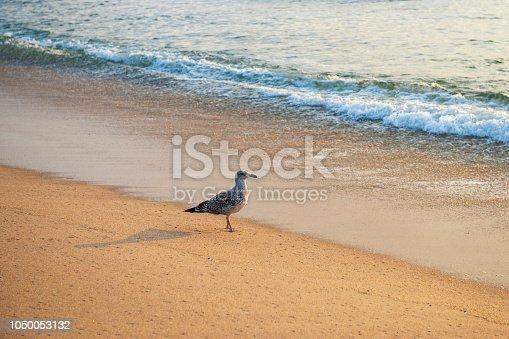 Shorebird on beach, Long Branch, New Jersey, USA