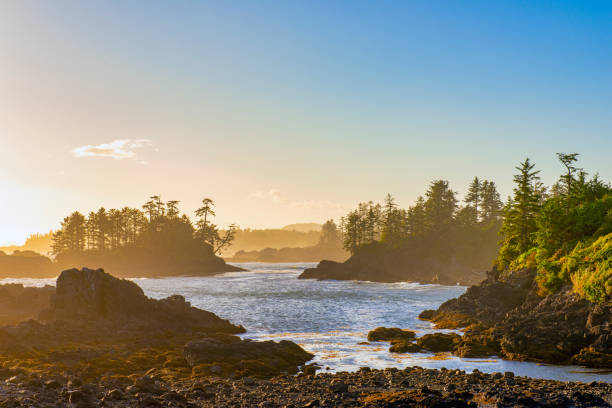 Shoreline at wild pacific trail in Ucluelet, Vancouver Island, BC View of the shoreline at wild pacific trail in Ucluelet, Vancouver Island, BC at sunset time. british columbia stock pictures, royalty-free photos & images