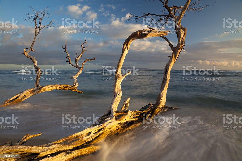 Shoreline Driftwood royalty-free stock photo