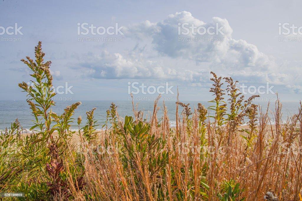 Shoreline Grasses in Lewes, Delaware stock photo
