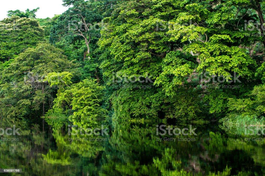 Shoreline of a jungle river in tropical rainforest, Congo stock photo