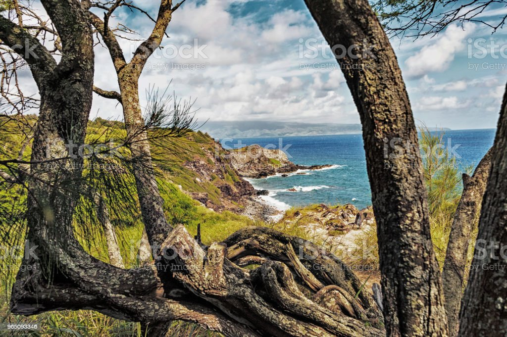 Shoreline Views Maui Hawaii from above with Trees. royalty-free stock photo