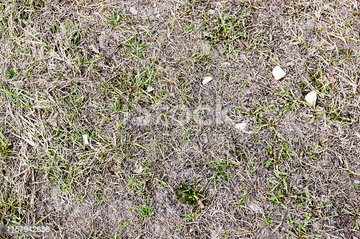 pictured in the photo short grass field with dry leaf