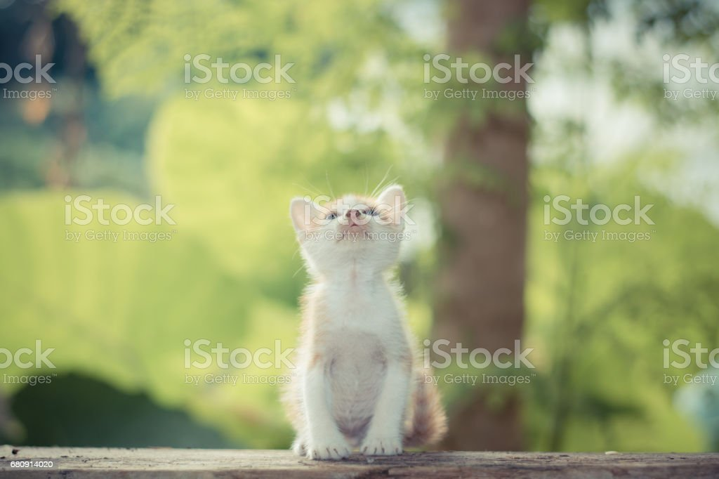 Short hair kitten sitting in a park looking up to the top. royalty-free stock photo