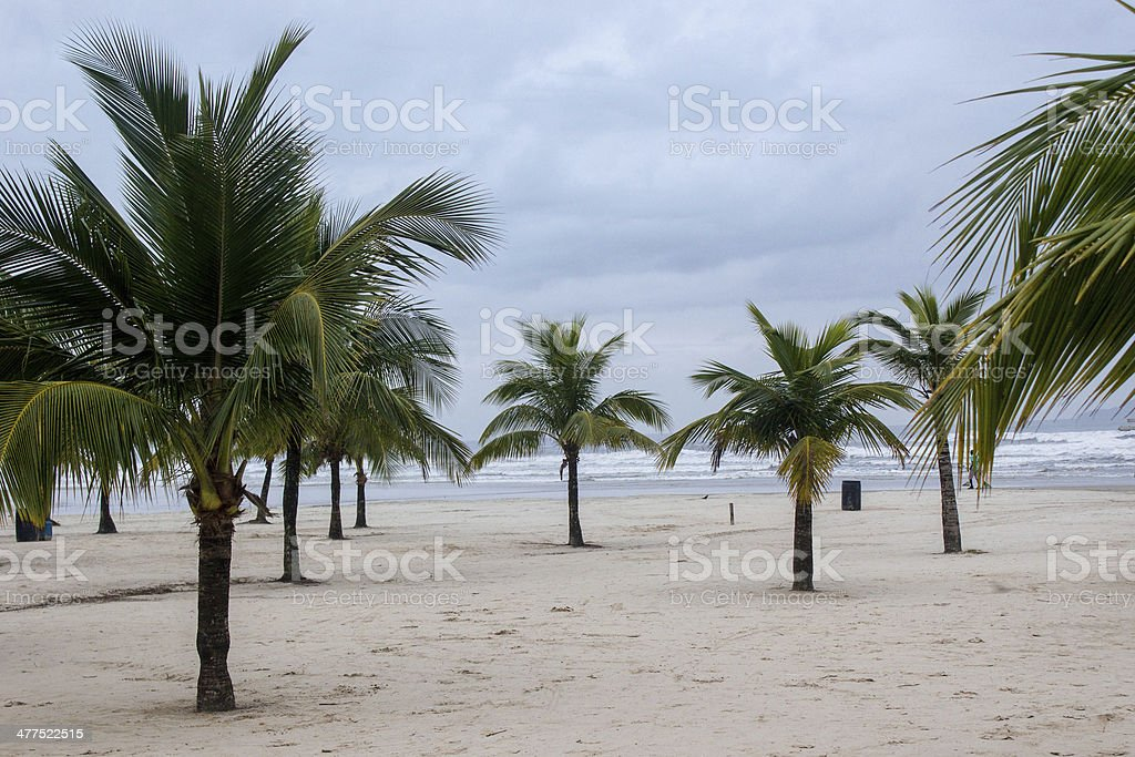 Short palm trees stock photo