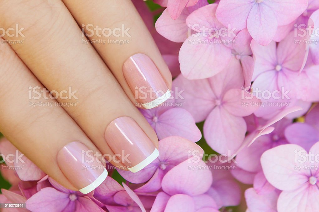 Short pink lilac French manicure. stock photo