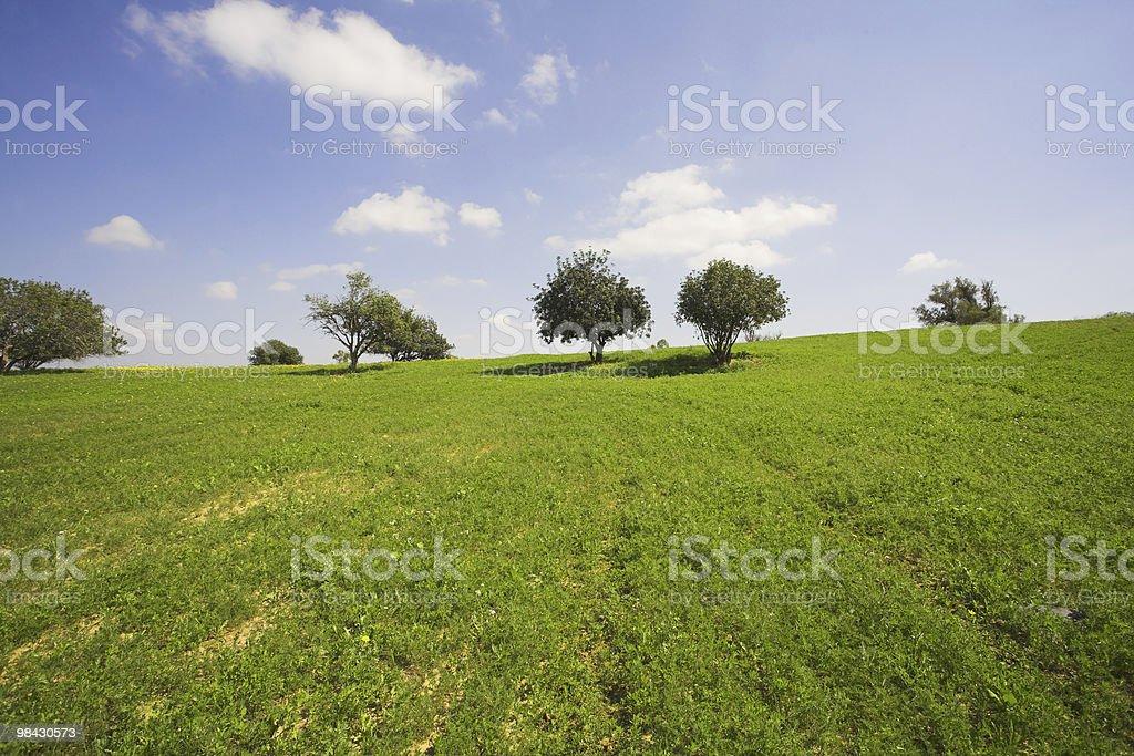 Short spring on coast of Mediterranean sea - grass, chamomiles royalty-free stock photo