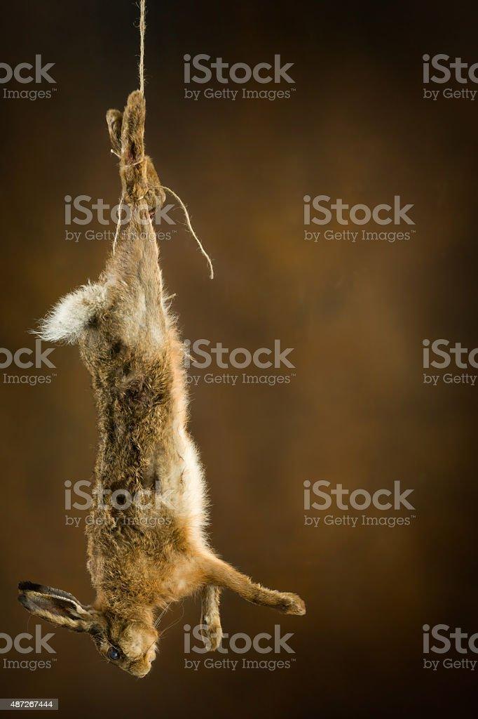 Shot hare stock photo