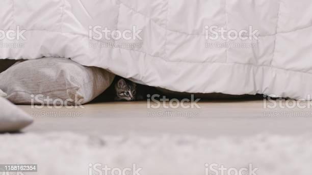 Shot of a cute gray with black stripes kitten hides under bed sunny picture id1158162354?b=1&k=6&m=1158162354&s=612x612&h=auiu6npnxlwqbmhc7rj8zl2ecizu582og1a3miwjbic=