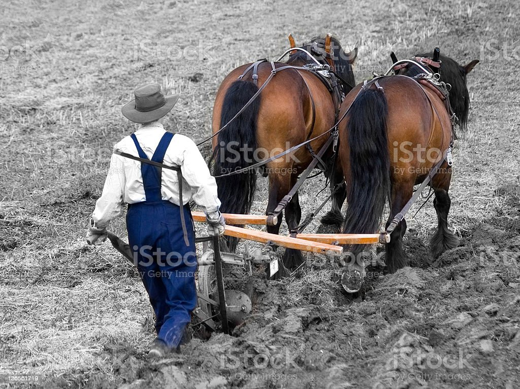 A shot of a farmer from behind using a horse drawn plough stock photo