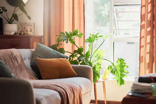 Shot of a serene living room at home