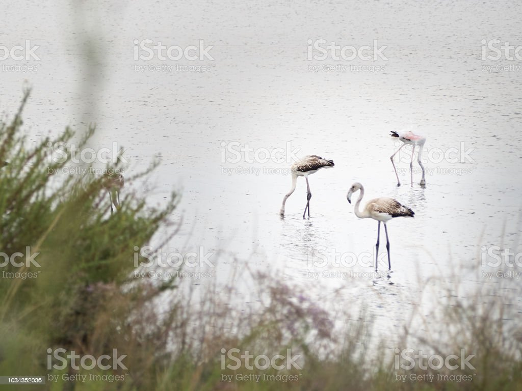 Shot of flamingos relaxing in a protected oasi stock photo
