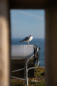 Shot throw a window of a seagull at \