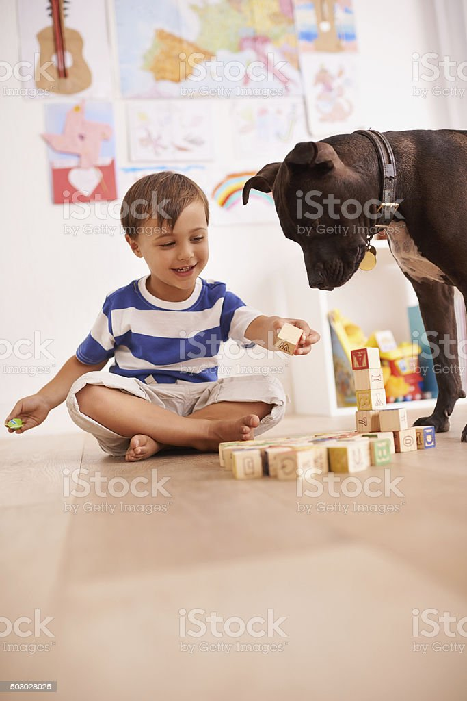 Should I build you a doggie house? stock photo
