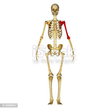 istock Shoulder joint 510998537