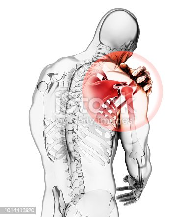 istock Shoulder painful skeleton x-ray, 3D illustration. 1014413620
