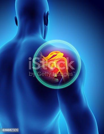 istock Shoulder painful skeleton x-ray, 3D illustration. 636682320