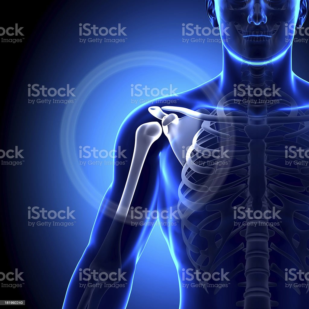 Shoulder Scapula Clavicle Anatomy Bones Stock Photo More Pictures