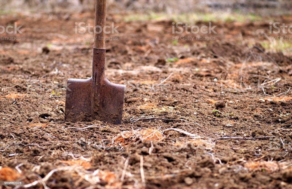 pala en el suelo en primavera jardín, profundidad del campo, espacio de copia - Foto de stock de Agricultura libre de derechos