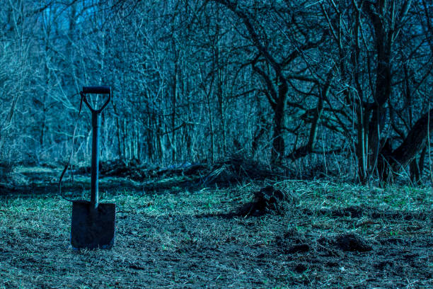 shovel in the ground in a bright night forest exciting atmosphere stock photo