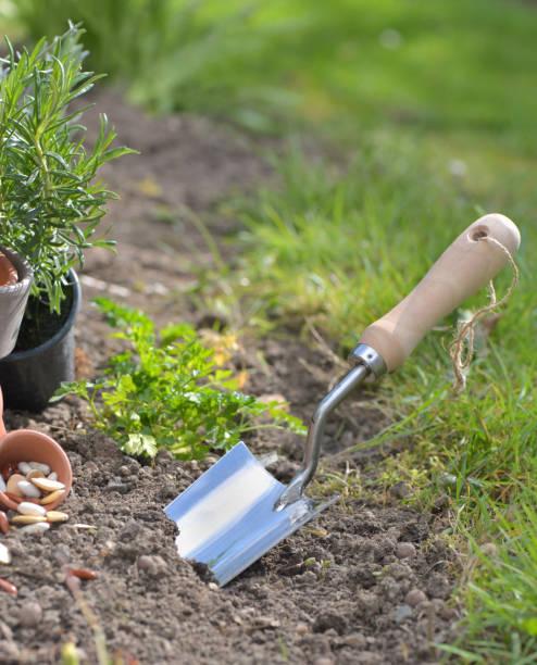 schop die in de grond van een tuinplant foto