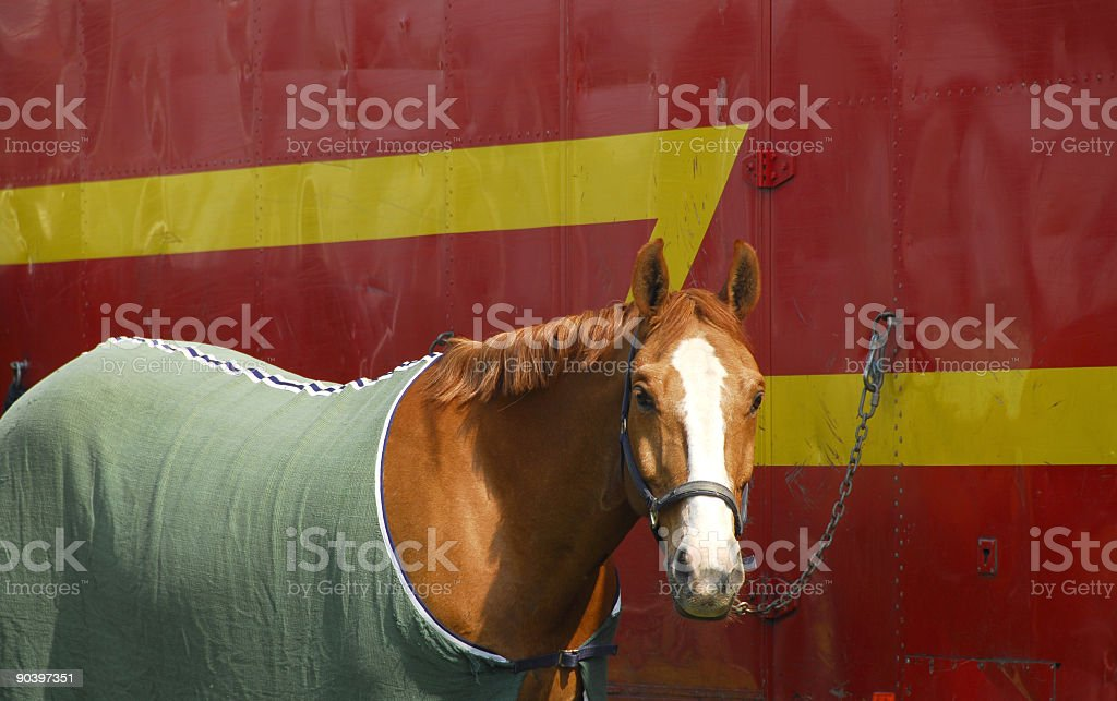 Show day royalty-free stock photo