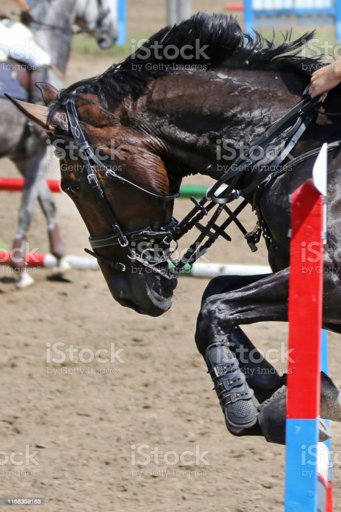 Show Jumper Horse And Rider Performing Jump At Show Jumping Training Selective Focus Stock Photo Download Image Now Istock