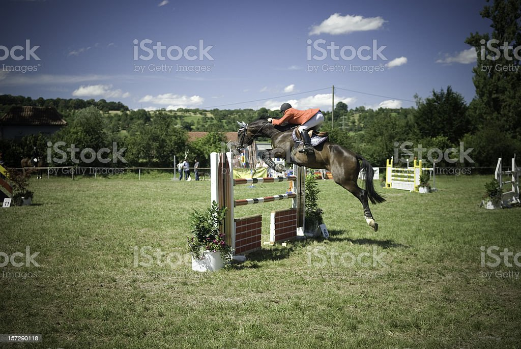 Show Jumper stock photo