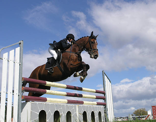 473 Black Horse Jumping Stock Photos Pictures Royalty Free Images Istock