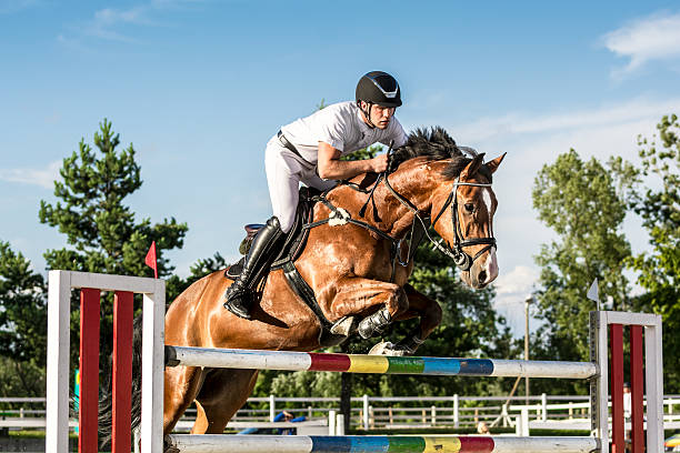 障害飛越馬とライダーのジャンプ、ハードル - 乗馬 ストックフォトと画像