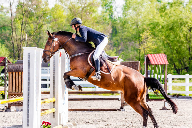 Show jumping horse with rider jumping over hurdle picture id679863538?b=1&k=6&m=679863538&s=612x612&w=0&h=i8fdug6tuakxrxeuawoulpeslmhddn cjgeji218wu4=