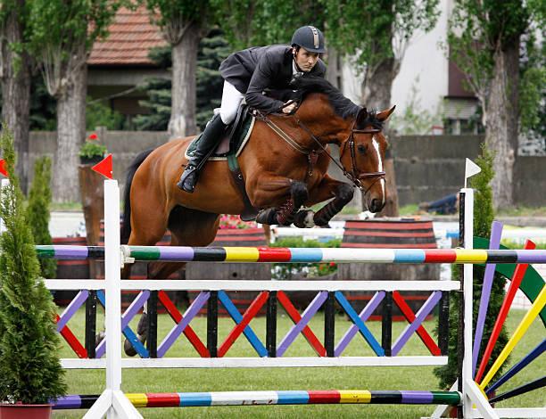 show jumping - hästhoppning bildbanksfoton och bilder