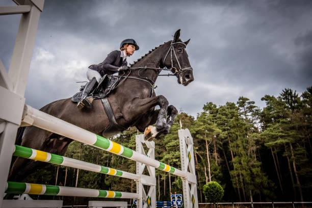 hoppning - hästhoppning bildbanksfoton och bilder