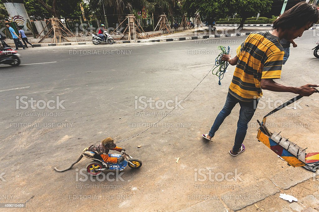 Show with Macaque Monkey, Animal Abuse, Indonesia royalty-free stock photo