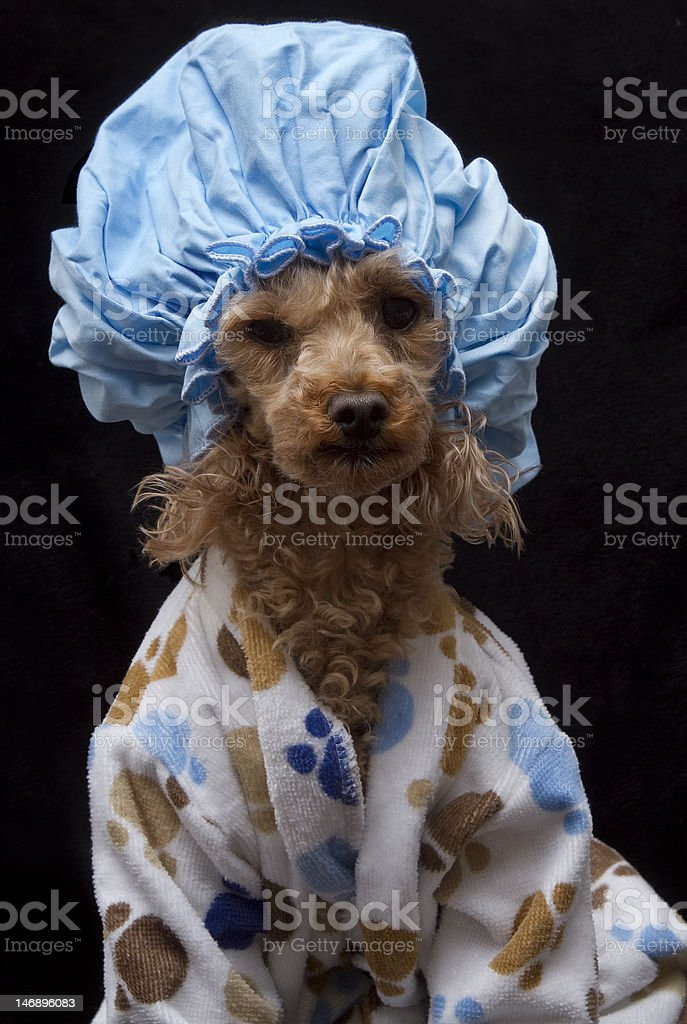 Shower Cap and Paw Prints stock photo