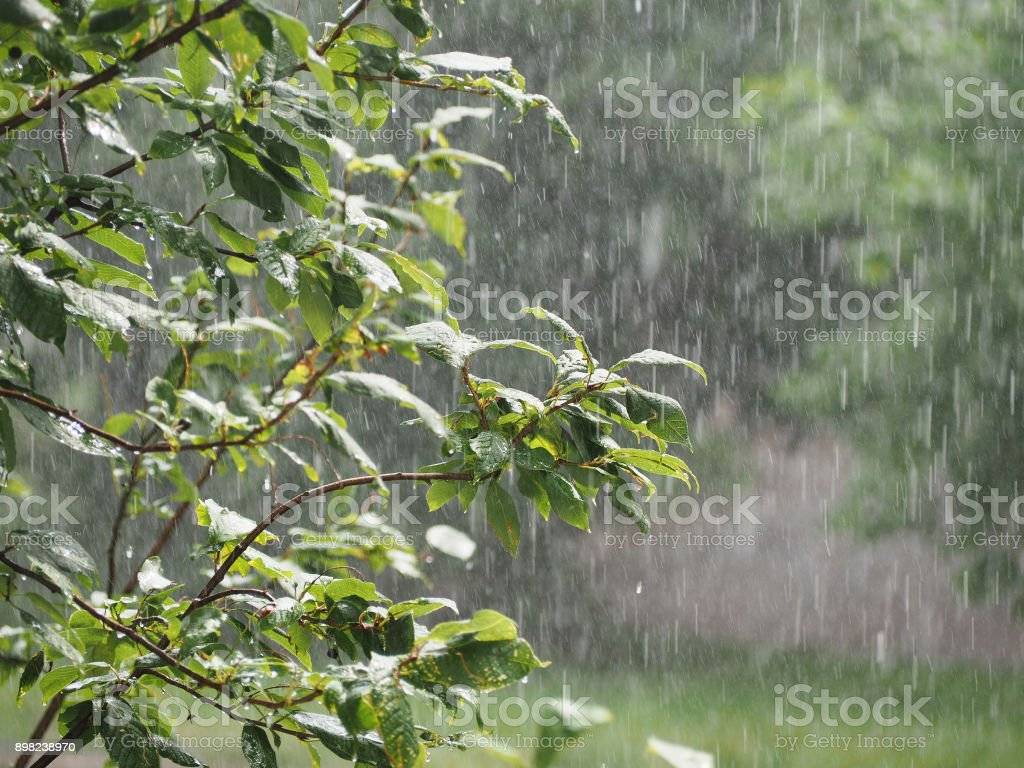 Shower in the garden. Downpour, pouring rain in the summer