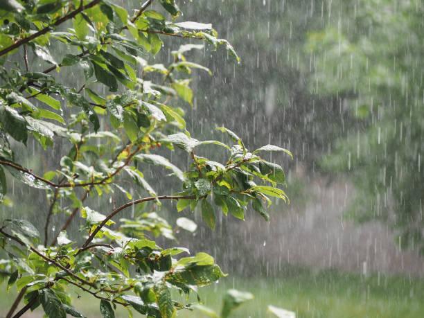 ducha en el jardín. aguacero, lluvia que vierte en el verano - lluvia fotografías e imágenes de stock
