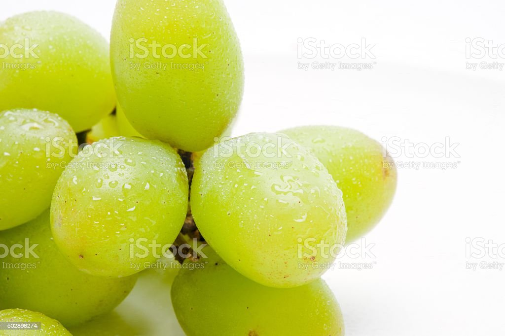 Showered Grapes stock photo