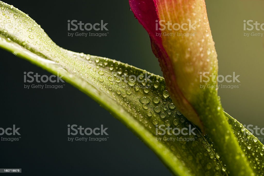 Showered in morning dew. stock photo