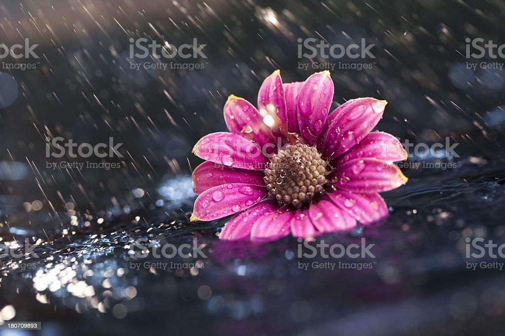 Showered in rain stock photo