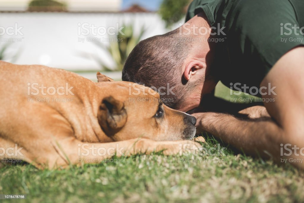 Showing affection to your dog stock photo