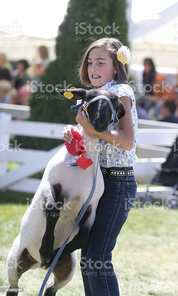 Showing at a County Fair stock photo