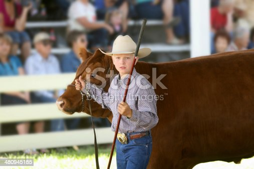 Child showing a beef heifer at a 4-H show during the County Fair.